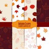 Insieme del modello senza cuciture con le foglie di autunno variopinte Fotografie Stock