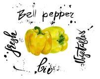 Insieme del peperone dolce di vettore giallo Pittura disegnata a mano dell'acquerello sul fondo bianco, illustrazione dell'alimen Fotografia Stock