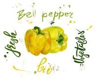 Insieme del peperone dolce di vettore giallo Pittura disegnata a mano dell'acquerello sul fondo bianco, illustrazione dell'alimen Immagine Stock