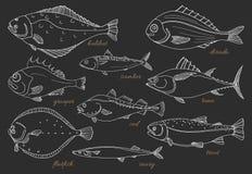 Insieme del pesce di mare Frutti di mare Schizzo di vettore Fotografia Stock