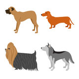 Insieme del piano dei cani Immagini Stock Libere da Diritti