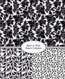 Insieme del reticolo floreale senza giunte Fiori su una priorità bassa bianca Fotografia Stock