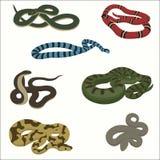 Insieme del serpente isolato su bianco Immagine Stock