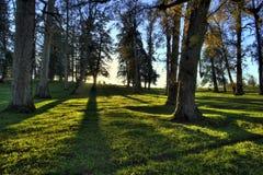 Insieme del sole della foresta Fotografia Stock