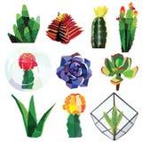 Insieme del succulente fotografia stock libera da diritti
