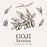 Insieme del superfood della bacca di Goji Illustrazione nutriente del disegno della mano di vettore dell'alimento di salute Immagine Stock