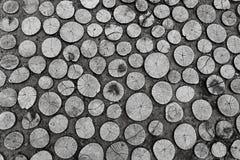 Insieme del taglio rotondo dei ceppi di albero con gli anelli annuali Immagine Stock