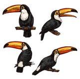 Insieme del tucano esotico dell'uccello royalty illustrazione gratis