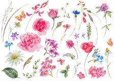 Insieme dell'acquerello degli elementi naturali di estate floreale d'annata royalty illustrazione gratis