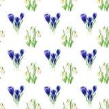 Insieme dell'acquerello dei fiori della primavera Modello di bucaneve e del croco Progetti gli elementi per fondo, l'insegna, pro Fotografia Stock