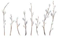 Insieme dell'acquerello dei rami di albero del salice Immagine Stock