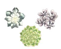 Insieme dell'acquerello dei succulenti Fotografie Stock