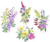 Insieme dell'acquerello del mazzo medicinale di estate royalty illustrazione gratis