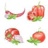 Insieme dell'acquerello della verdura della paprica, pomodoro, peperoncino, cipolla, foglia del basilico isolata su fondo bianco royalty illustrazione gratis
