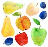Insieme dell'acquerello delle mele, delle pere e delle prugne Fotografia Stock Libera da Diritti