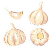 Insieme dell'aglio. Fotografia Stock Libera da Diritti