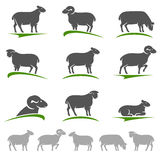 Insieme dell'agnello e delle pecore Vettore Fotografia Stock