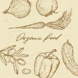 Insieme dell'alimento biologico Fotografia Stock Libera da Diritti