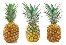 Insieme dell'ananas isolato sui precedenti bianchi Fotografia Stock Libera da Diritti