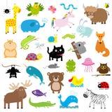 Insieme dell'animale dello zoo Raccolta sveglia del personaggio dei cartoni animati Isolato Priorità bassa bianca Istruzione dei  Immagine Stock