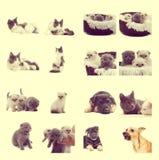 Insieme dell'animale domestico Fotografia Stock Libera da Diritti