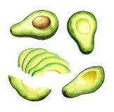 Insieme dell'avocado illustrazione vettoriale