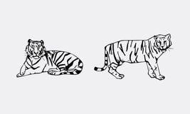 Insieme dell'emblema della tigre Fotografia Stock