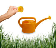 Insieme dell'erba del giardino, mano, watering-can Immagine Stock
