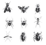 Insieme dell'icona degli insetti fotografie stock libere da diritti