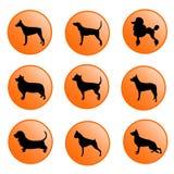 Insieme dell'icona dei cani Immagini Stock Libere da Diritti