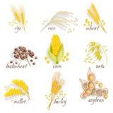 Insieme dell'icona dei cereali Fotografie Stock Libere da Diritti