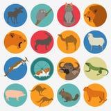 Insieme dell'icona dei mammiferi degli animali degli uccelli degli animali Stile piano di vettore Immagine Stock