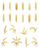 Insieme dell'icona dell'orecchio del grano illustrazione di stock