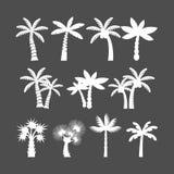Insieme dell'icona della palma, vettore eps10 Immagine Stock