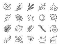 Insieme dell'icona delle erbe e delle spezie Icone incluse come basilico, timo, lo zenzero, il pepe, il prezzemolo, la menta e pi illustrazione vettoriale