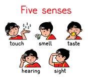 Insieme dell'icona di cinque sensi royalty illustrazione gratis