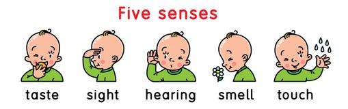 Insieme dell'icona di cinque sensi illustrazione di stock