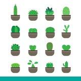 Insieme dell'icona di colore del cactus Fotografie Stock Libere da Diritti