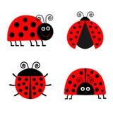 Insieme dell'icona di Ladybird della coccinella Priorità bassa del bambino Insetto divertente Progettazione piana isolata Fotografia Stock