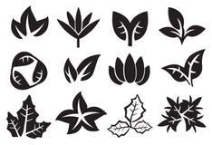 Insieme dell'icona di vettore delle foglie Fotografia Stock