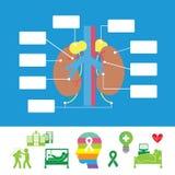 Insieme dell'icona dell'ospedale di anatomia del rene fotografia stock