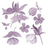 Insieme dell'illustrazione botanica dell'acquerello degli elleboro isolati su fondo bianco in filtro da cianotipia Immagine Stock