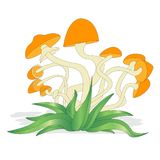 Insieme dell'illustrazione dei funghi su bianco isolato Fotografia Stock Libera da Diritti