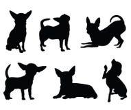 Insieme dell'illustrazione del cane della chihuahua Fotografia Stock Libera da Diritti