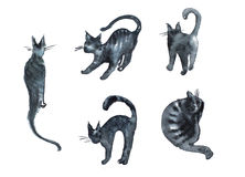 Insieme dell'illustrazione dell'acquerello delle siluette dei gatti degli elementi Fotografia Stock