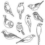 Insieme dell'illustrazione di vettore degli uccelli Illustrazione dell'acquerello Fotografia Stock Libera da Diritti