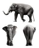 Insieme dell'immagine dell'elefante di sumatran Immagine Stock Libera da Diritti