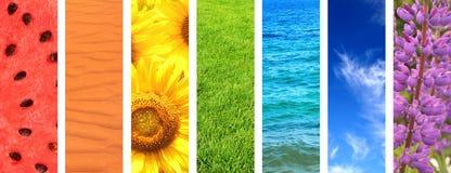 Insieme dell'insegna con gli elementi della natura dei colori dell'arcobaleno Fotografia Stock Libera da Diritti