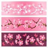 Insieme dell'insegna dei fiori del fiore di ciliegia illustrazione di stock