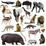 Insieme dell'ippopotamo e di altri animali africani Isolato Immagine Stock